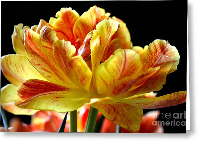 Springy Greeting Cards - Burst of Color Greeting Card by Deb Halloran