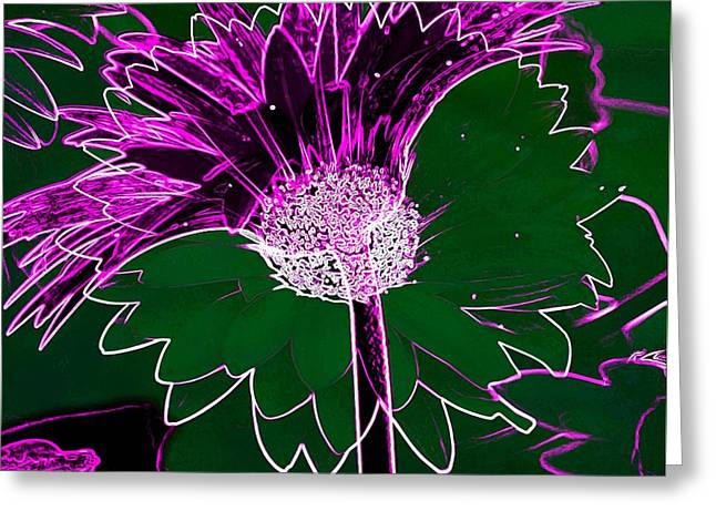 Fushia Greeting Cards - Burst Of Spring Greeting Card by Irma BACKELANT GALLERIES