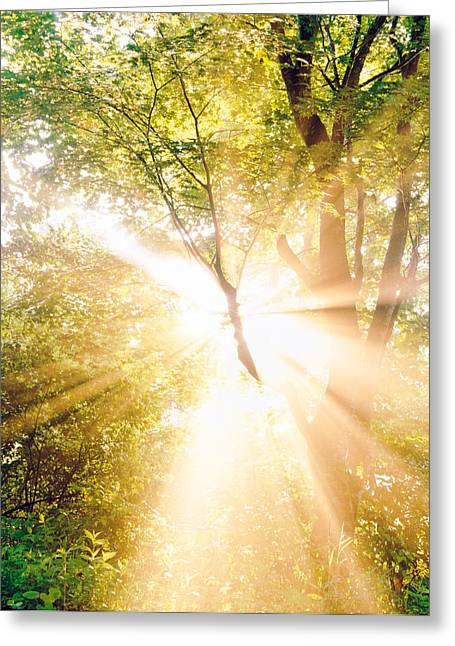 Bursting Color Greeting Cards - Burst Of White Light Through Green Trees Greeting Card by Panoramic Images