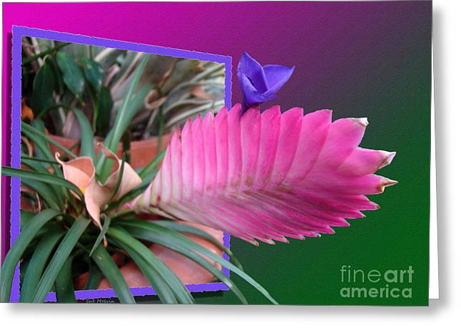 Creative Manipulation Digital Greeting Cards - Bursting Forth in Bloom Greeting Card by Sue Melvin