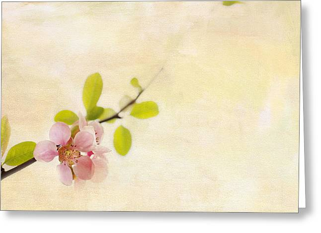 Pink Blossoms Greeting Cards - Bursting Out Greeting Card by Rebecca Cozart