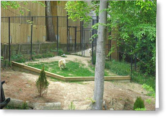 Parks Greeting Cards - Busch Gardens - Animal Show - 121231 Greeting Card by DC Photographer