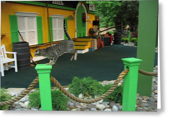 Green Photographs Greeting Cards - Busch Gardens - Animal Show - 121239 Greeting Card by DC Photographer