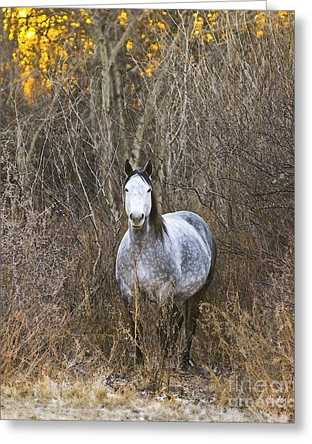 Dappled Light Greeting Cards - Bush Mare Greeting Card by Judy Wood