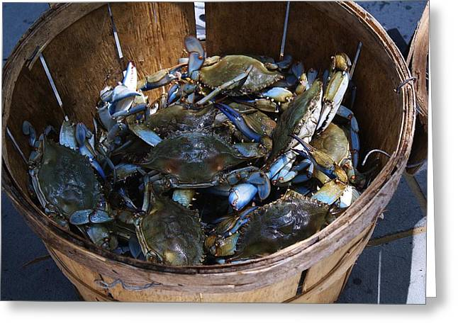 Paulette Thomas Greeting Cards - Bushel Basket of Blue Crabs Greeting Card by Paulette Thomas