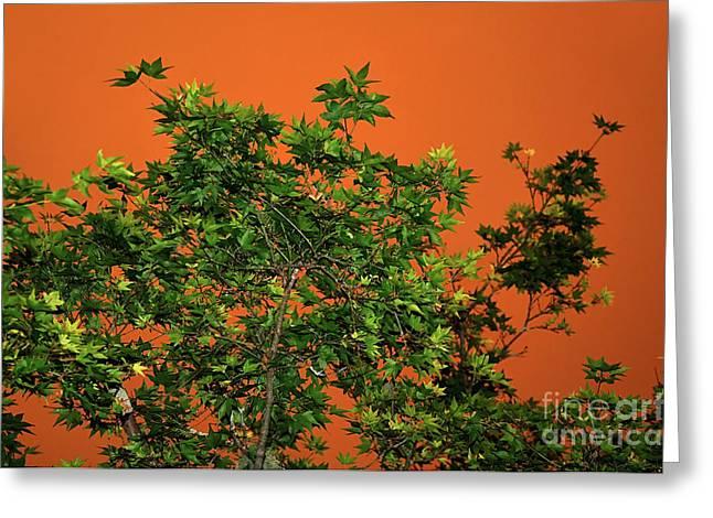 Bushfire Greeting Cards - Bushfire Skies Greeting Card by Kaye Menner