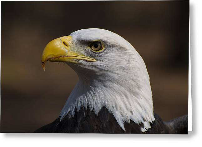 Eagle Images Greeting Cards - bust image of a Bald Eagle Greeting Card by Chris Flees