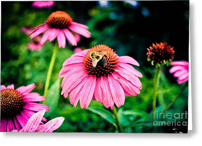Colorful Photography Greeting Cards - Busy Bee Greeting Card by Colleen Kammerer