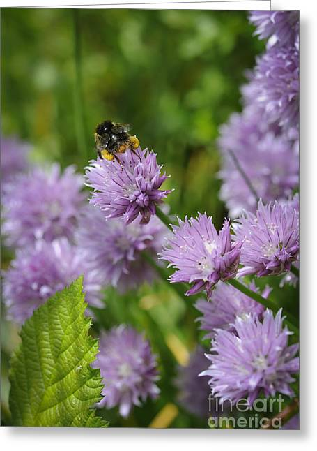 2013 Digital Art Greeting Cards - Busy Bee Greeting Card by Donald Davis