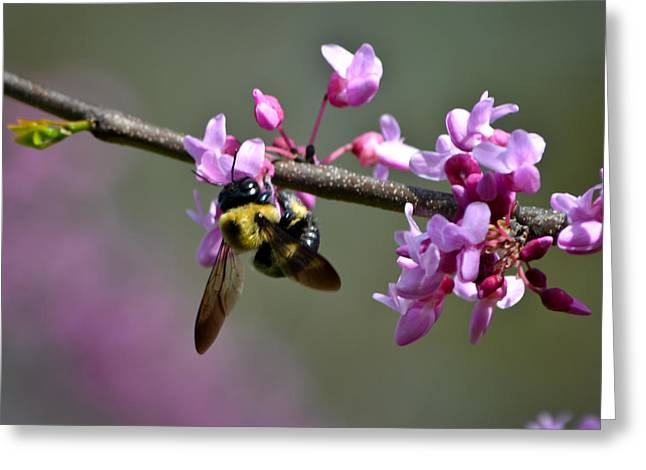 Marykzeman Greeting Cards - Busy Bee on the Bud Greeting Card by Mary Zeman