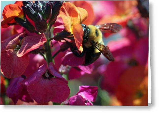 Wallflower Greeting Cards - Busy Bee on Wallflower Greeting Card by Suzanne Gaff