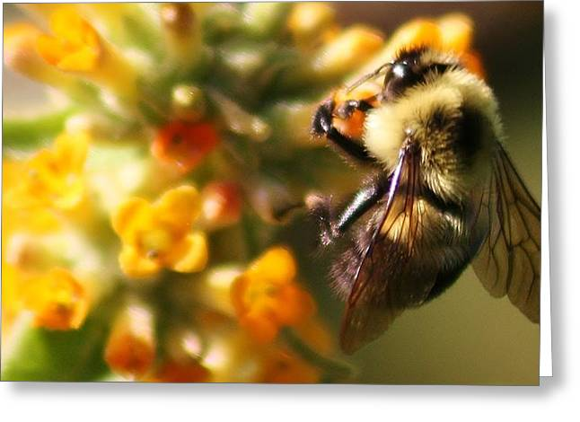 Paulette Thomas Greeting Cards - Busy Bee Greeting Card by Paulette Thomas