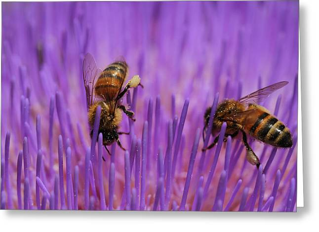 Busy Bees Greeting Card by Kelly Jones