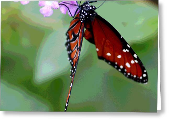 Butterfly Digital Art Greeting Cards - Busy Busy II Greeting Card by Suzanne Gaff