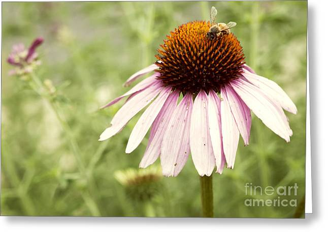 Busy Little Bee Greeting Card by Juli Scalzi