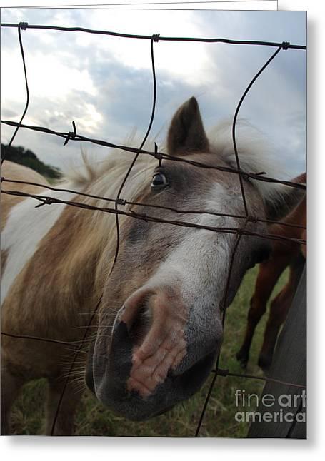 Eyelash Greeting Cards - But Doc I Am Not Insane Greeting Card by Peter Piatt