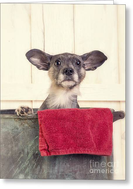 Cute Puppy Greeting Cards - But I dont want a bath Greeting Card by Edward Fielding