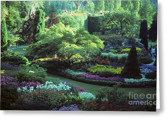 Tourist Site Greeting Cards - Butchard Gardens Vancouver Island Greeting Card by Bob Christopher