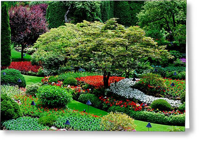 Butchart Gardens Greeting Card by Lisa Phillips