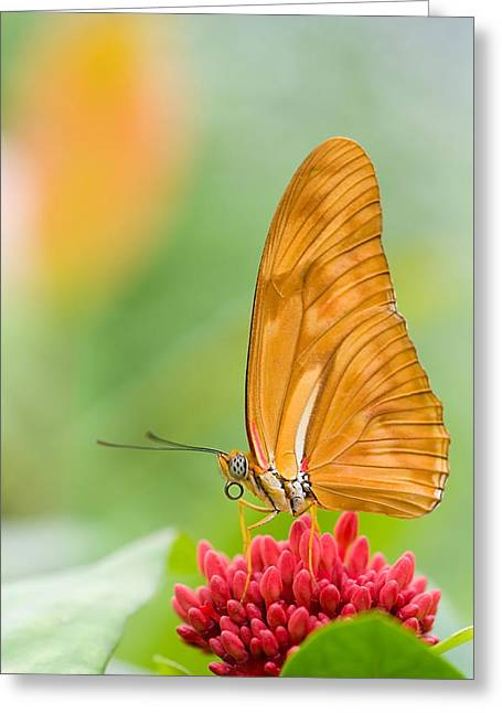 Butterflies Pyrography Greeting Cards - Buttefly Greeting Card by Steffen Gierok