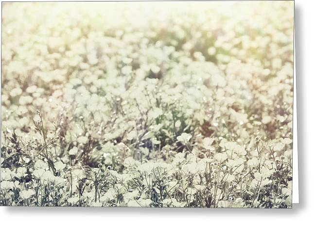 Wildflower Fine Art Greeting Cards - Buttercup Flower Field Greeting Card by Wim Lanclus