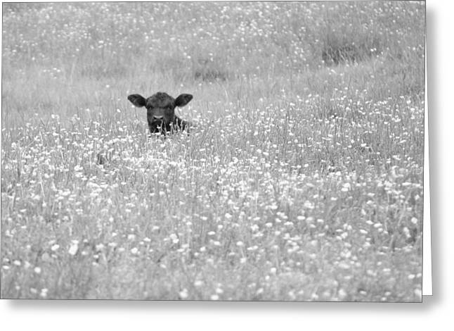 Buttercup In Black-and-white Greeting Card by JD Grimes