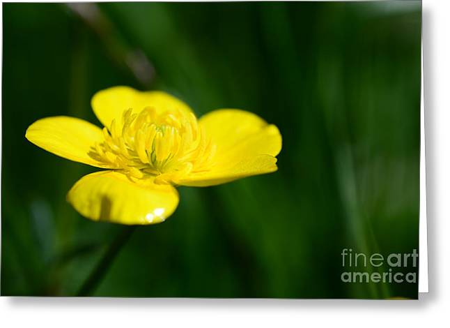 Hannes Cmarits Greeting Cards - Buttercup In The Meadow Greeting Card by Hannes Cmarits