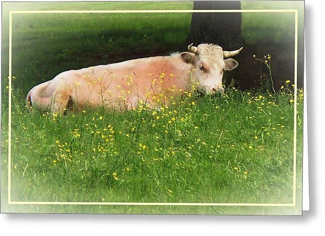 Fed Digital Art Greeting Cards - Buttercup Greeting Card by Joy Nichols