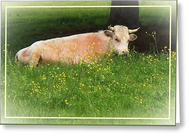 Maine Farms Digital Greeting Cards - Buttercup Greeting Card by Joy Nichols
