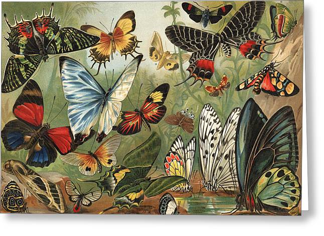 Lithography Greeting Cards - Butterflies 2 Greeting Card by Mutzel