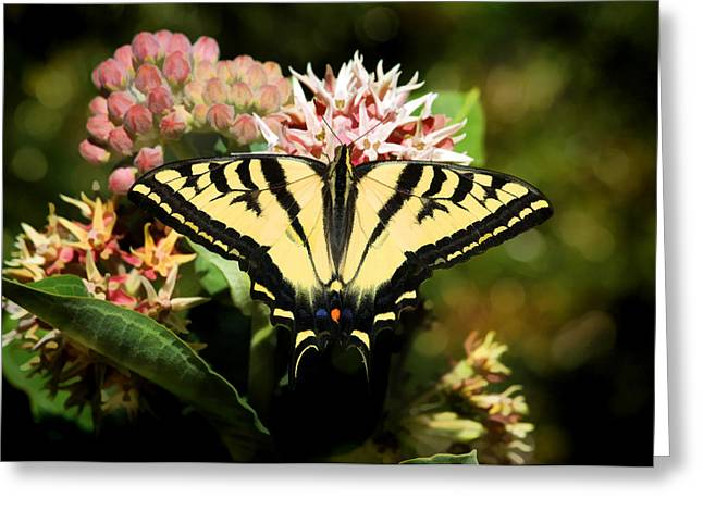 Swallowtail Butterflies Greeting Cards - Butterflies Are Free Greeting Card by Donna Kennedy