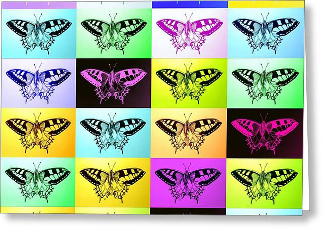Cushion Paintings Greeting Cards - Butterflies Greeting Card by Cathy Jacobs