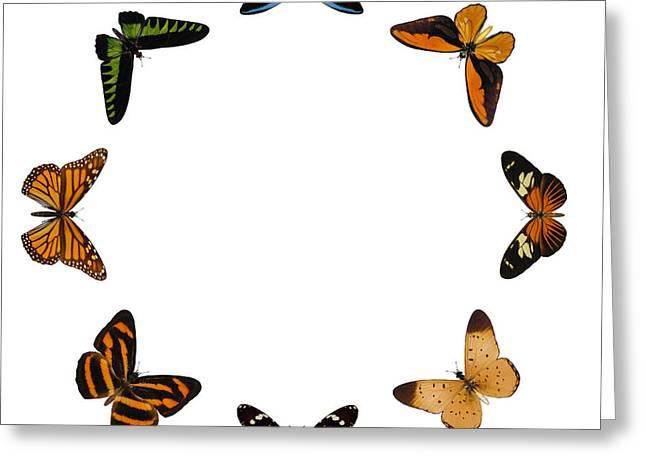 Beige Abstract Greeting Cards - Butterflies Circle Greeting Card by Ludek Sagi Lukac