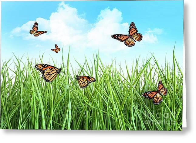 Butterflies in tall wet grass  Greeting Card by Sandra Cunningham