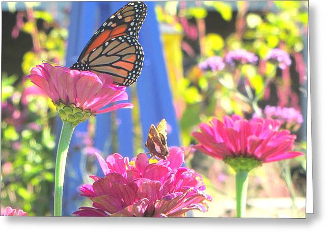 Zinna Greeting Cards - Butterflies in  the garden Greeting Card by Melinda Stogsdill