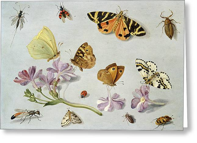 Butterflies Greeting Card by Jan Van Kessel