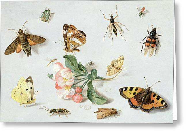 Flora And Fauna Greeting Cards - Butterflies moths and other insects with a sprig of apple blossom Greeting Card by Jan Van Kessel
