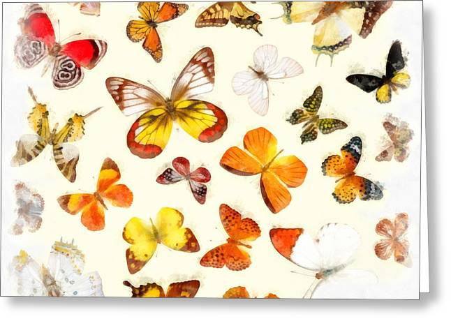 Wildlife Watercolor Greeting Cards - Butterflies Square Greeting Card by Edward Fielding