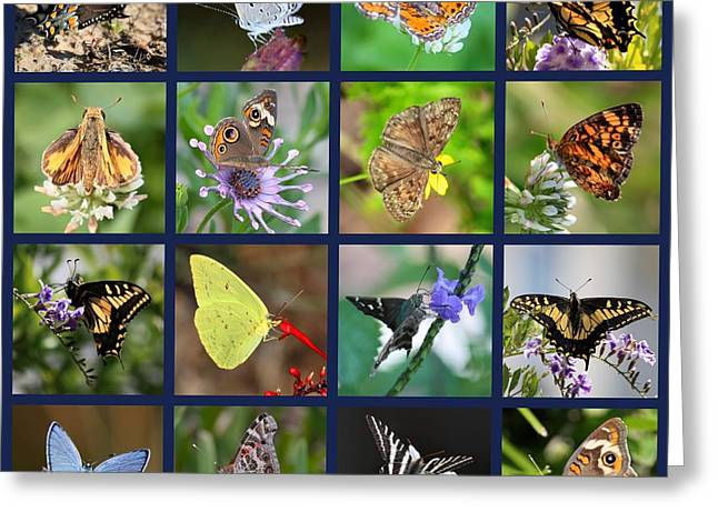 Nature Collage Greeting Cards - Butterflies Squares Collage Greeting Card by Carol Groenen