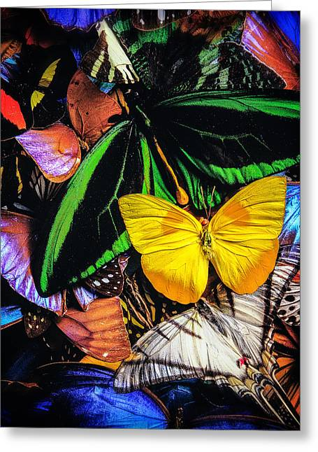 Color Green Greeting Cards - Butterflies Greeting Card by YoPedro