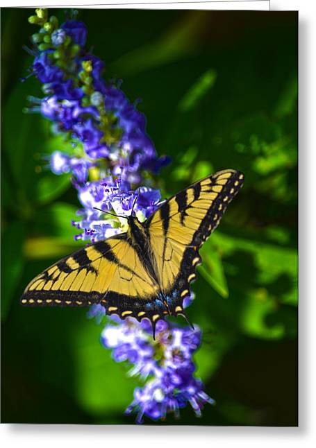 Sandi Oreilly Greeting Cards - Butterflly Bush And The Swallowtail Greeting Card by Sandi OReilly