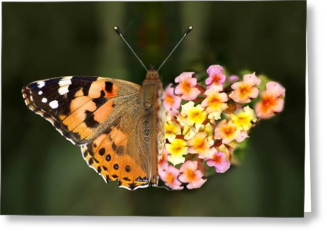 Paint Photograph Greeting Cards - Butterflower Greeting Card by Meir Ezrachi