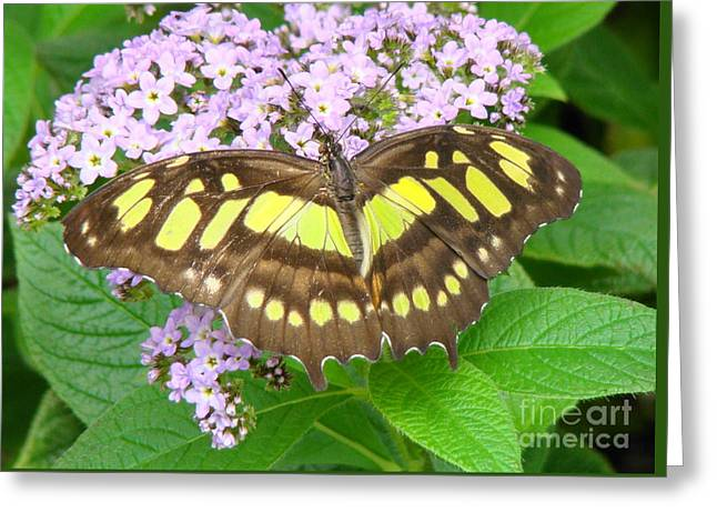 Print Photographs Greeting Cards - Butterfly 16 Greeting Card by Aneta Srodon