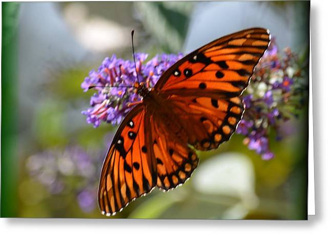Floral Digital Art Digital Art Greeting Cards - Butterfly Aglow Greeting Card by Maria Urso