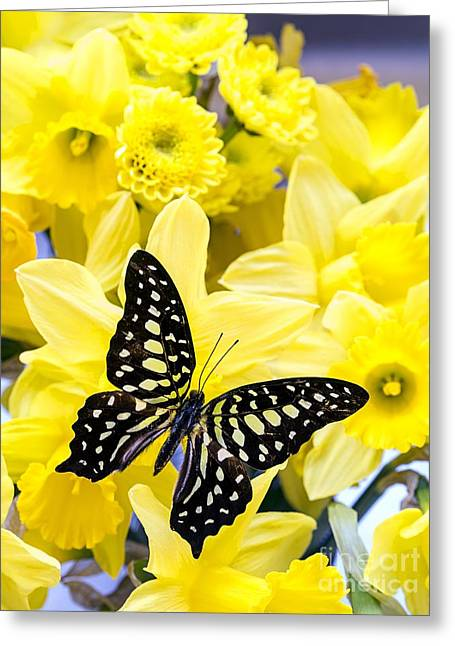 Swallowtail Greeting Cards - Butterfly among the daffodils Greeting Card by Edward Fielding
