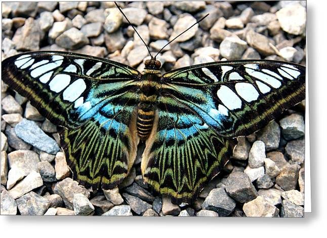 Justin Woodhouse Greeting Cards - Butterfly amongst stones Greeting Card by Justin Woodhouse