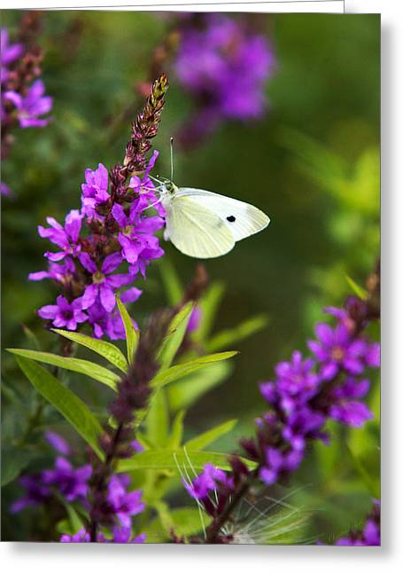 Butterfly On Flower Greeting Cards - Butterfly And Bouquet Greeting Card by Christina Rollo