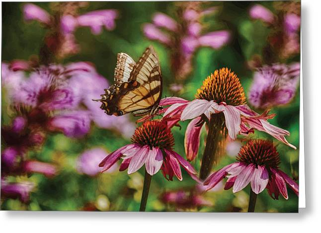 Spicebush Digital Art Greeting Cards - Butterfly and Coneflower Greeting Card by Melinda Dreyer