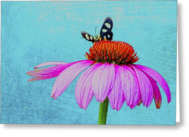 Abstracted Coneflowers Greeting Cards - Butterfly and Coneflower on Turquoise Greeting Card by Dan Holland