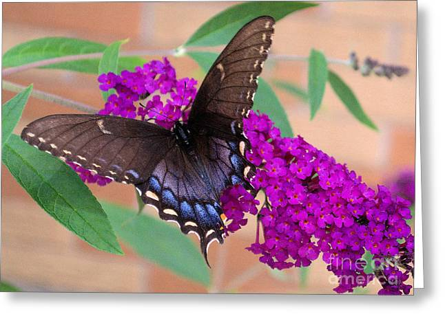 Butterfly And Friend Greeting Card by Luther   Fine Art